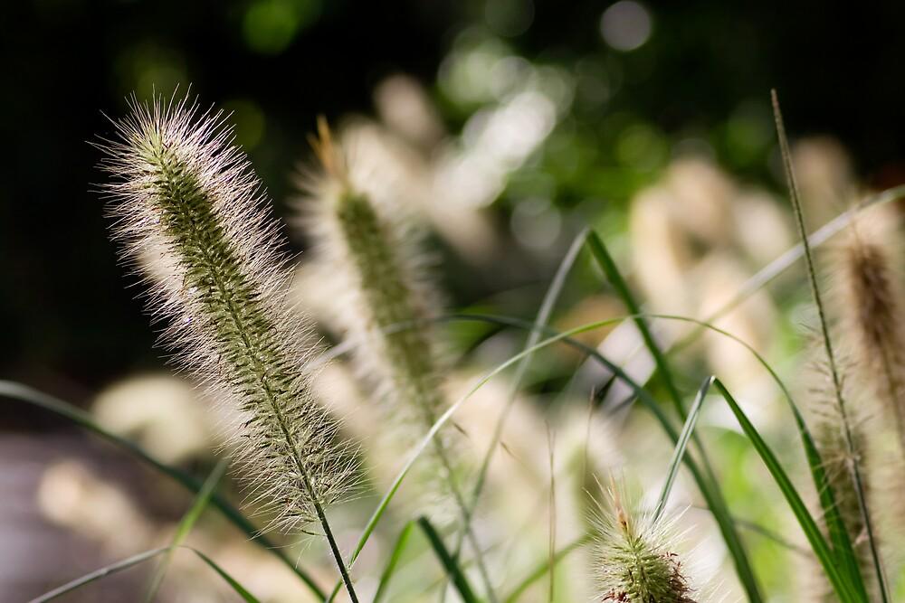 Serene Plantlife by Peter Wilson