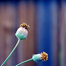 Along The Back Fence by Sandra Moore