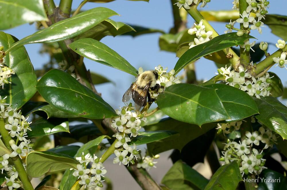 Bumble Bee by Henri Irizarri