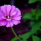 Many Petals by Sandra Moore