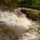 Bubbly Brook by Cameron O'Neill