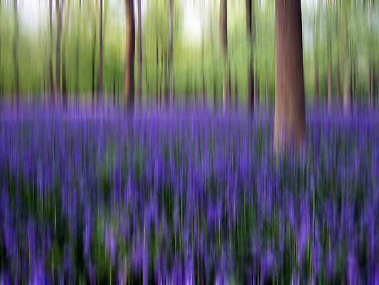 Bluebell Wood by cazjeff1958