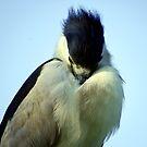 Heron II by Sandra Moore
