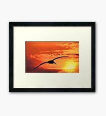 Into The Morning Light Framed Print