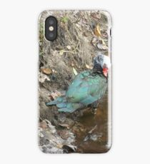 Muscovy Hen, Preening iPhone Case