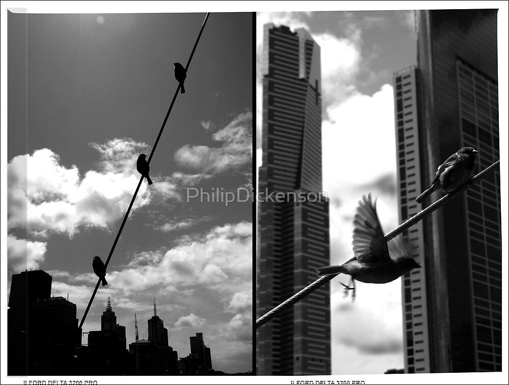 Birds on a Wire Dptych by PhilipDickenson