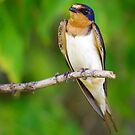 Bird On A Branch by Sandra Moore