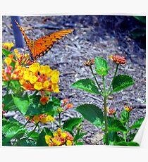 Wings Of Orange Poster