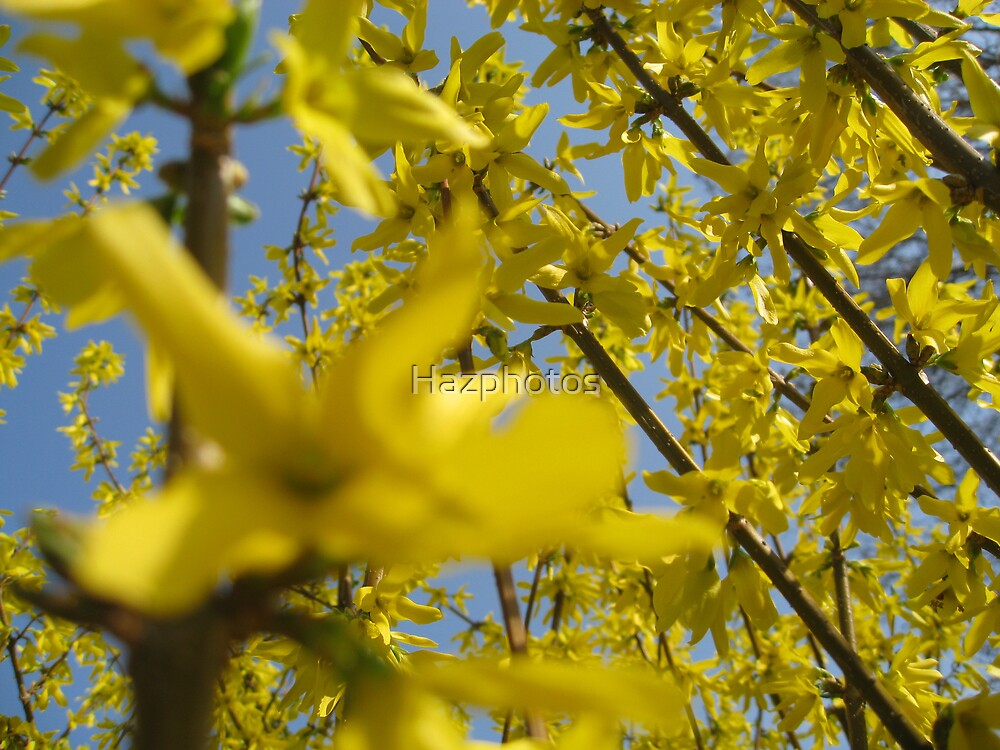 Spring has sprung by Hazphotos