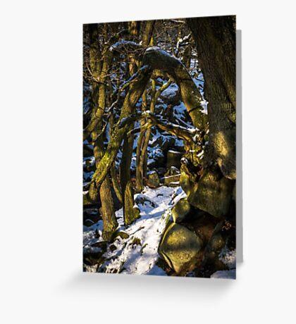 Padley Gorge Winter Greeting Card