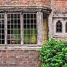 Windows by JEZ22