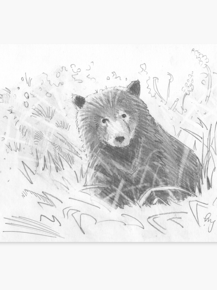 Grizzly Bear Cub Drawing Canvas Print