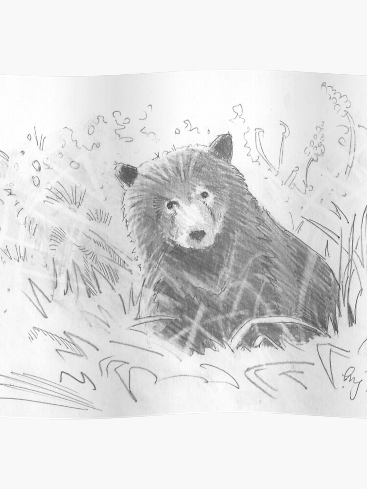 Grizzly Bear Cub Drawing Poster