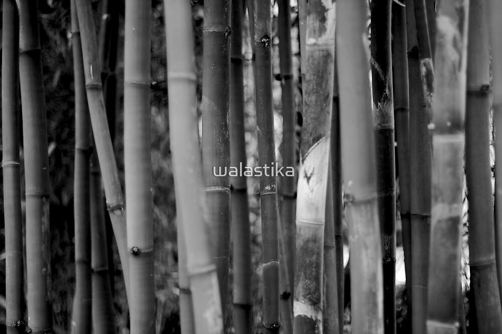 Bamboo Garden by walastika