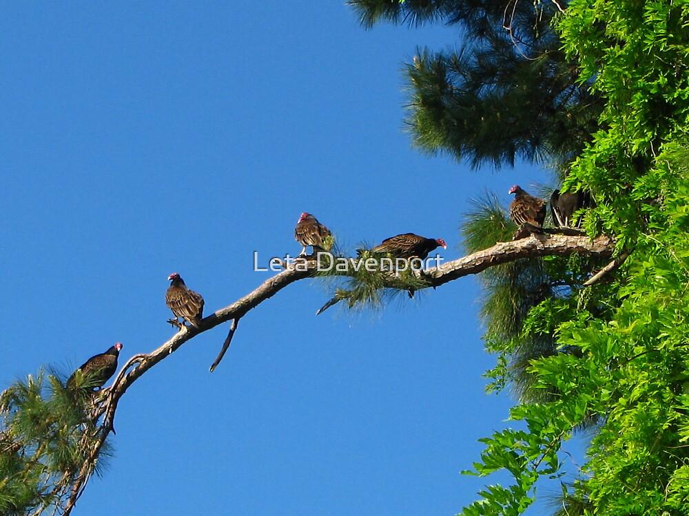 Vultures by Leta Davenport