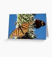 Blackboy, Butterflies & Bees - Mount Barker Summit Greeting Card