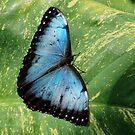 63017 blue mortho by pcfyi