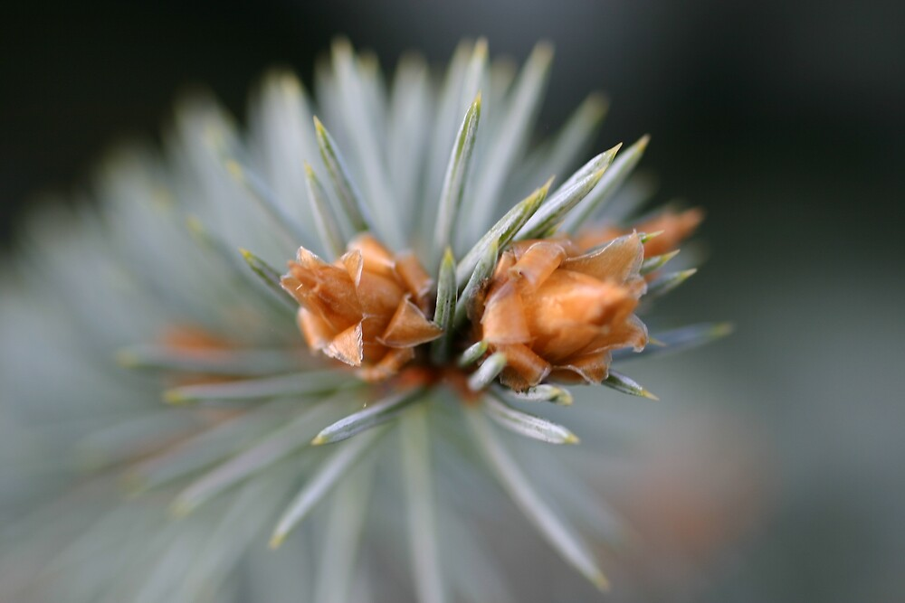 At The End of a Fir Tree by declown