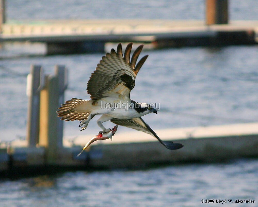 Flying Meal by lloydsjourney