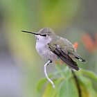 Hummingbird by Kathleen Brant
