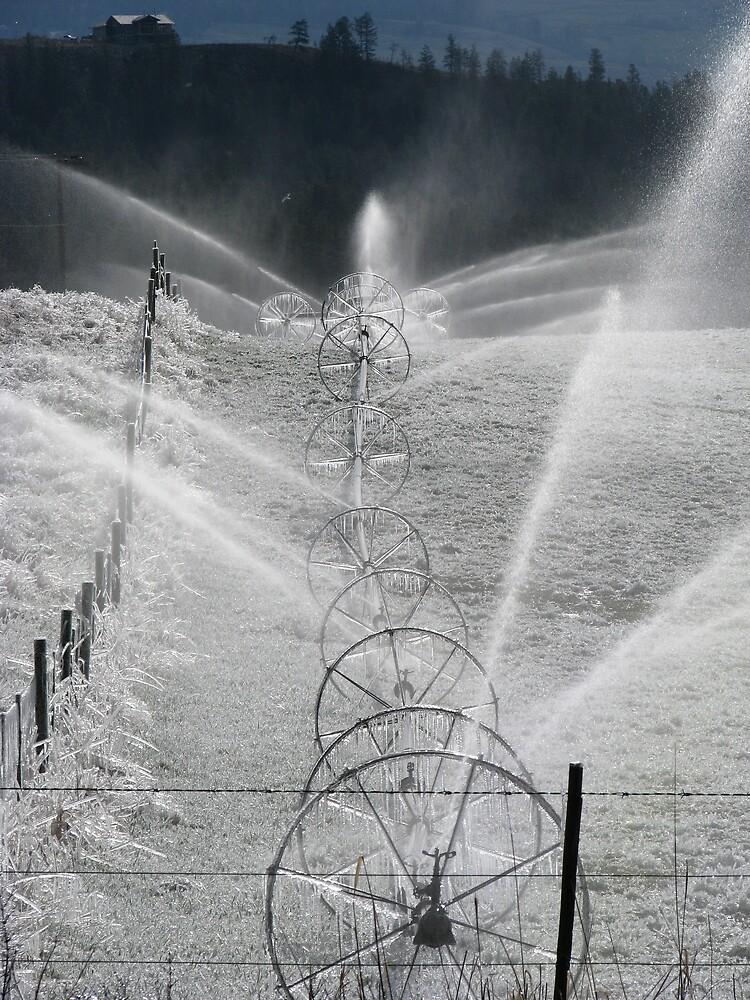 Frosty Sprinklers  by SpringLupin