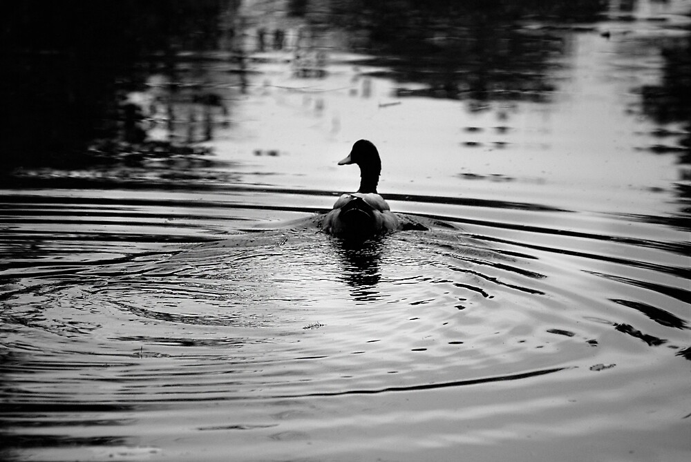Duck by Taylor Kling