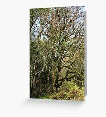 Canyon Creek 2 Greeting Card