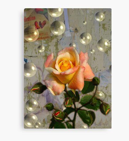 ROSA E BOLLE Canvas Print