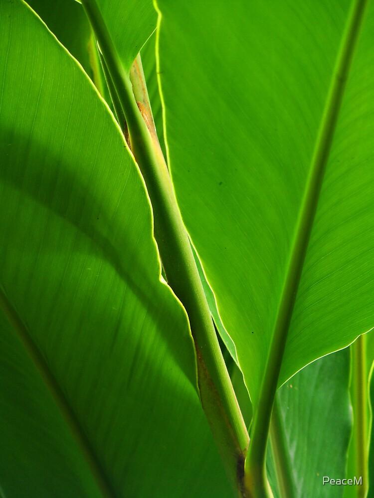 leaf by PeaceM