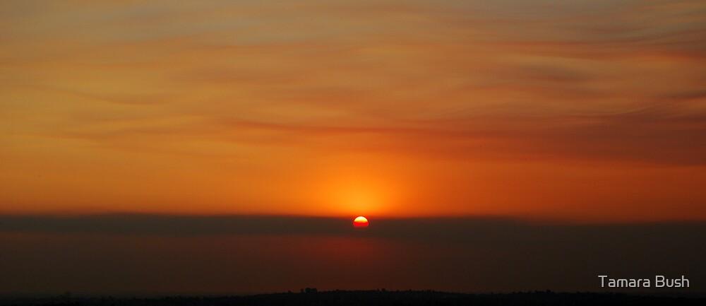 SUNSETS 1 by Tamara Bush