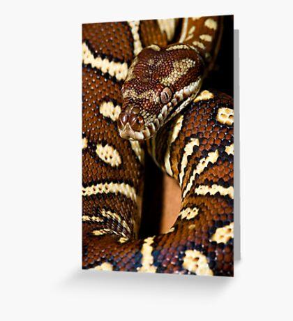 Centralian Carpet Python Greeting Card