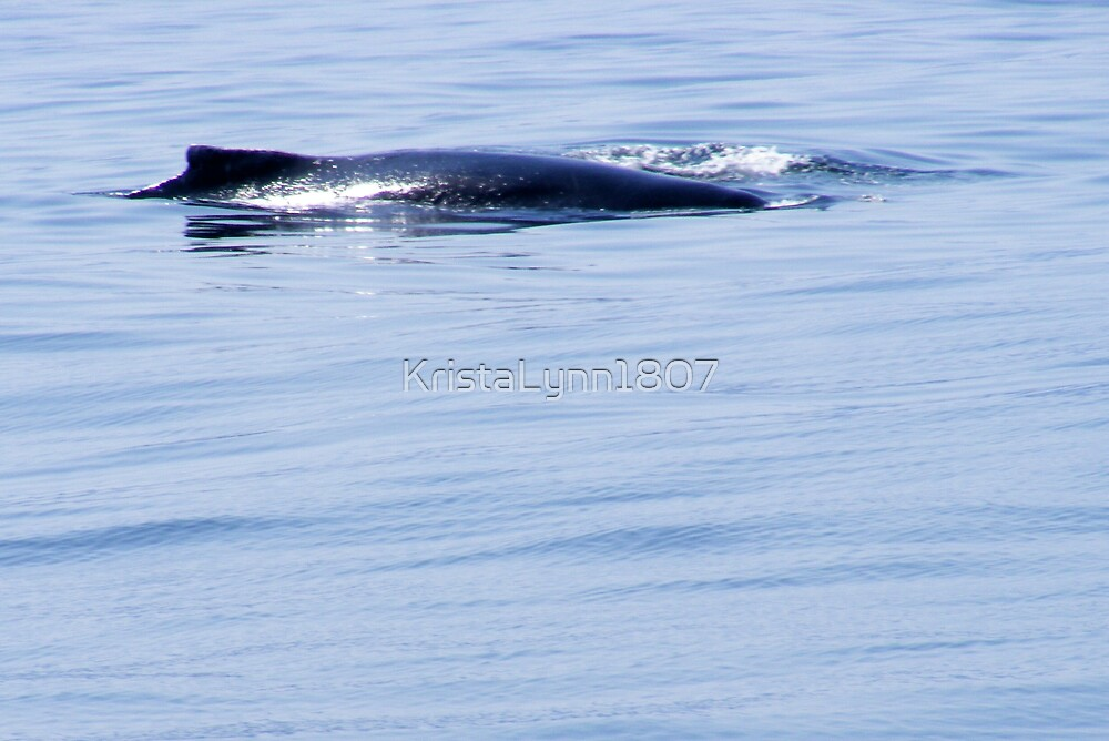 Humpback Whale by KristaLynn1807