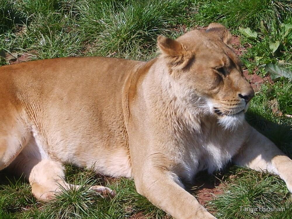 Lioness by Tanya Housham
