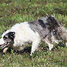 Border Collie Dog Portrait by Oldetimemercan