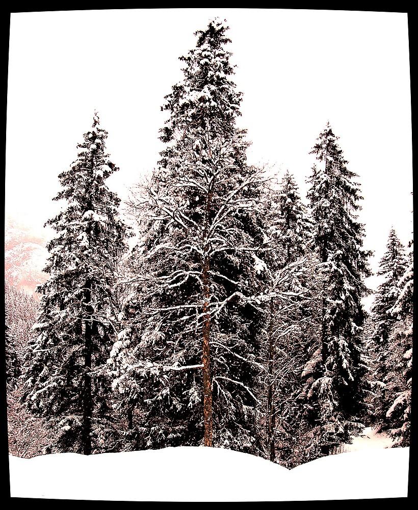 Snowfall by Nico3