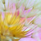 Bloomed by Veikko  Suikkanen