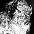 Sitting Bull by eon .
