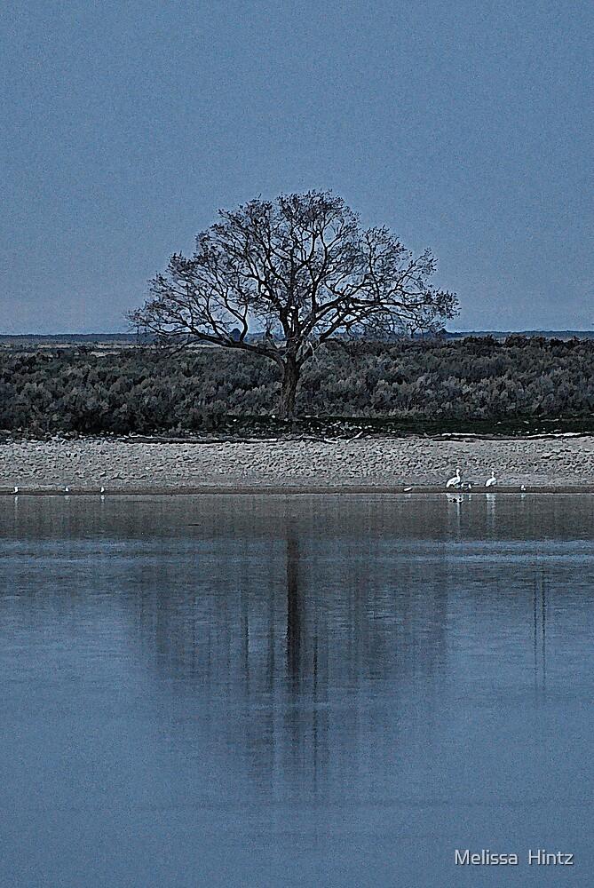 Reflecting by Melissa  Hintz
