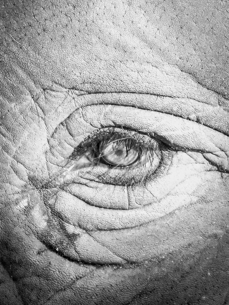 Elephant Eye by Eric Nagel