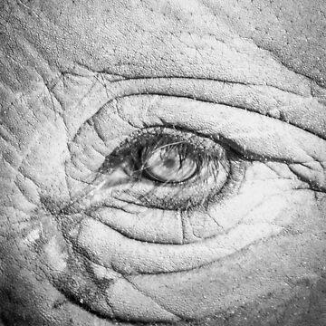 Elephant Eye by Enagel