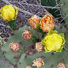 prickly pear 2 by Bruce  Dickson