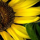 Slice of the Sunflower by designingjudy