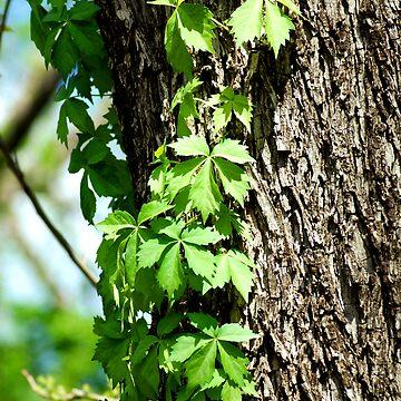 Tree Hugger by Tswieberg