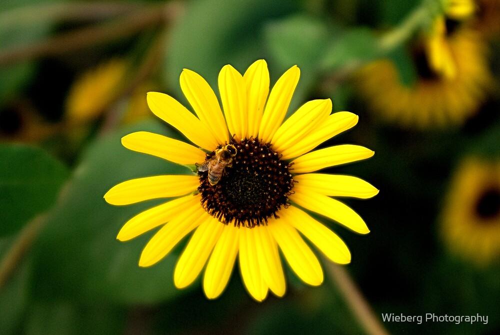 Innocent Bee-haviour by Susie Wieberg