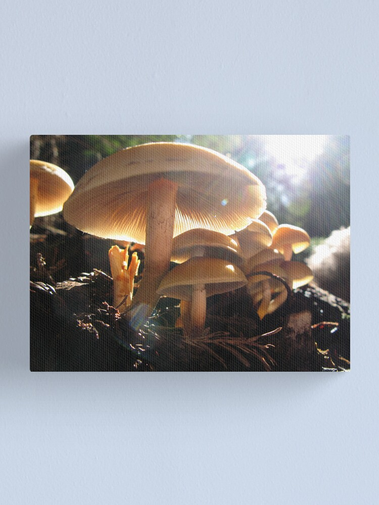 Alternate view of Shrooms Canvas Print