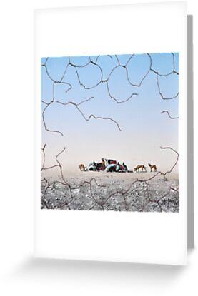 The Dingo Fence by John  Murray