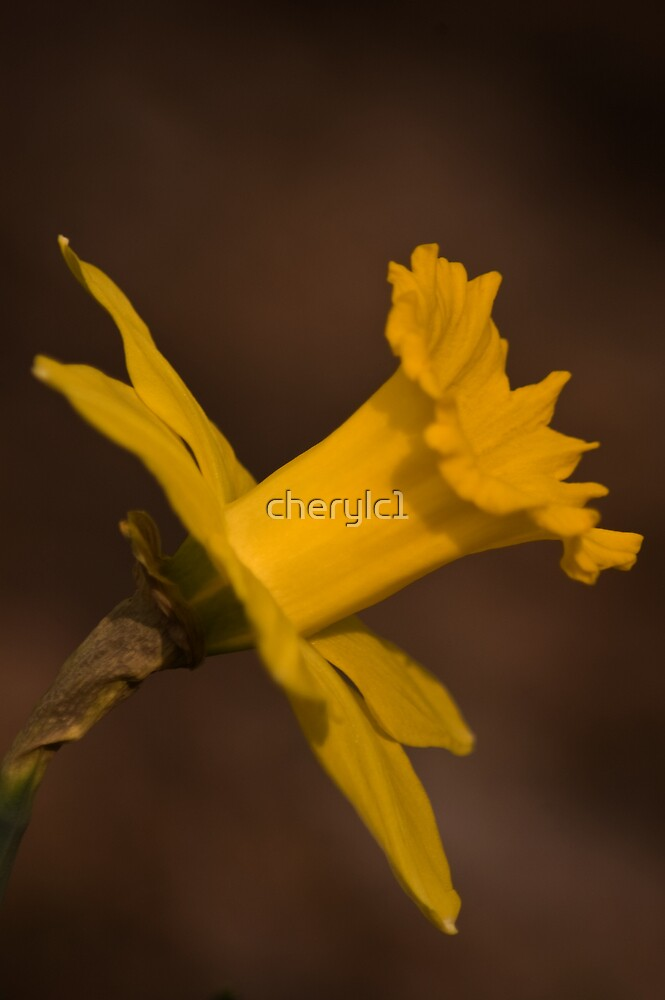 Nature's Gold  by cherylc1