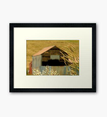 Country Grasses Framed Print