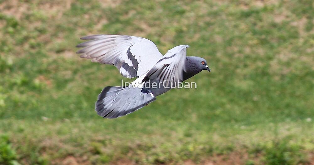 In Flight! by InvaderCuban