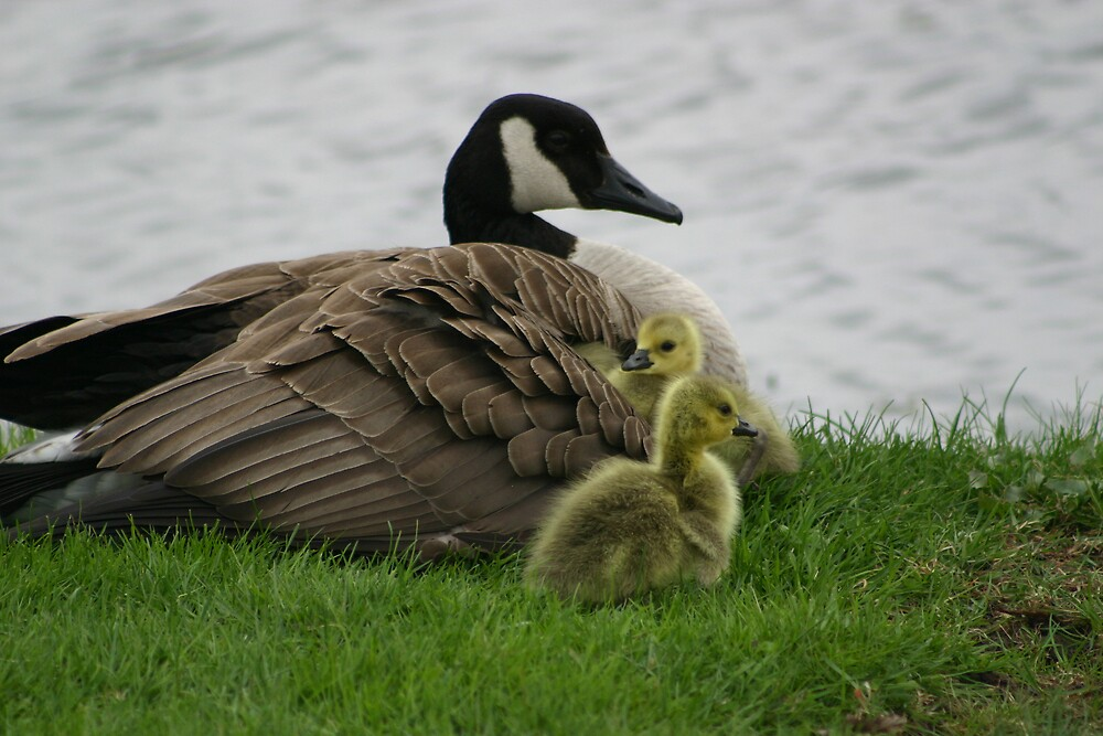 Mother Goose by declown